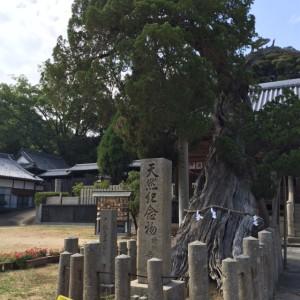 河上神社天然記念物
